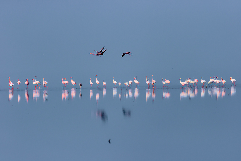 N4 - FLAMINGOS PROCESSION low